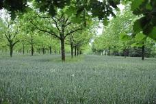 Agroforesterie - Chambres d'agriculture Bourgogne-Franche-Comté